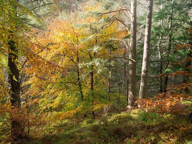 Beside the esker path in Evanton Community Wood