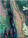 NH5966 : Black Rock Gorge by Julian Paren