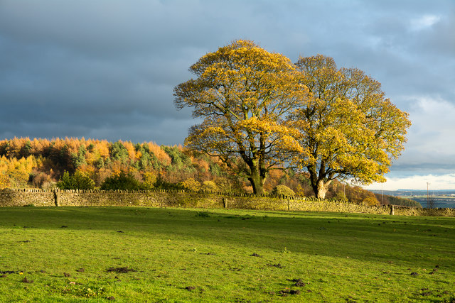 Autumnal trees near to High Wooley
