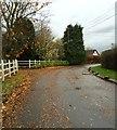 SJ7260 : Plant Lane by Jonathan Hutchins