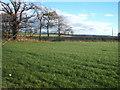 NZ1018 : Farmland near Ralston House by JThomas