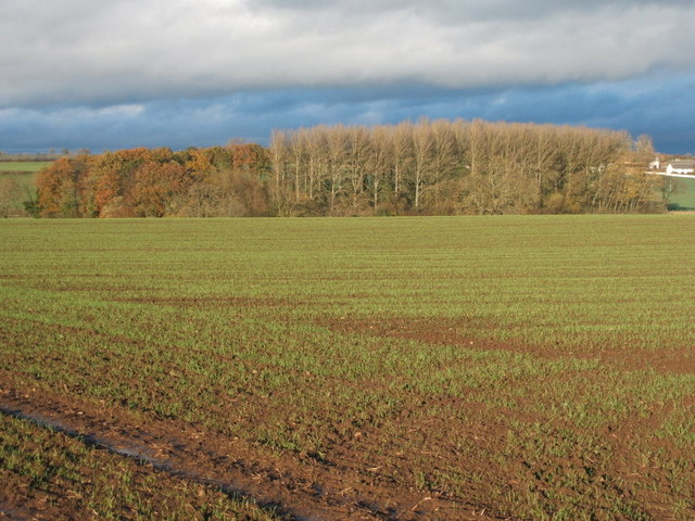 Crop field towards Willow Beds Woodland