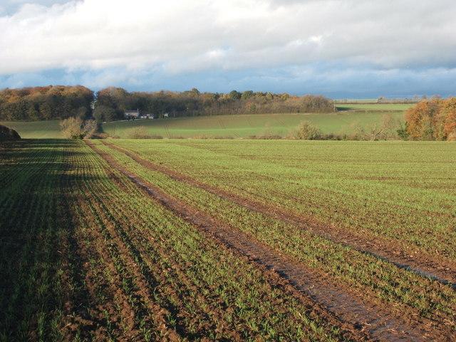 Crop field beside the B6275