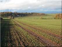 NZ2119 : Crop field beside the B6275 by JThomas