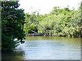 TG3216 : River Bure, Near Sedge Fen by David Dixon