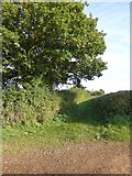 SX9499 : Footpath to the south end of Rewe by David Smith