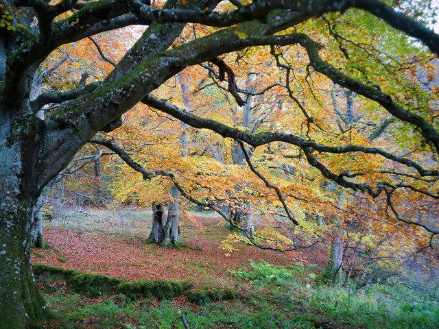 Close to the lochan in Drummondreach Oak Wood