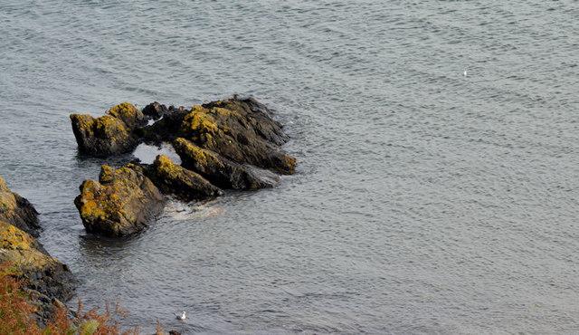 The shore at Helen's Bay - November 2015(1)