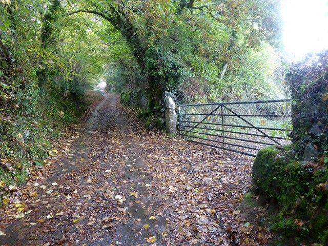 Field gate near Hannaford