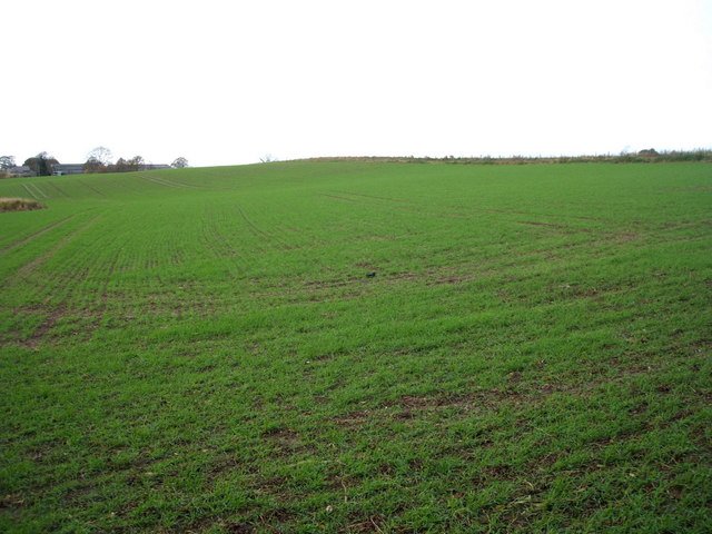 Young crop field near Bullmire Farm