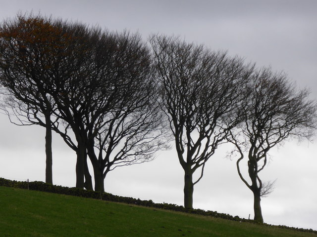 Trees on the skyline