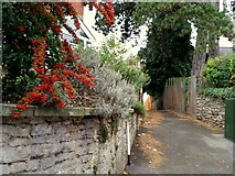 SO6024 : Pyracantha; Firethorn, and an alleyway by Jonathan Billinger