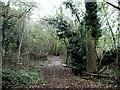TQ6661 : Pilgrims Way, near Trottiscliffe by Chris Whippet