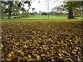 SO8845 : A carpet of fallen autumn leaves by Philip Halling