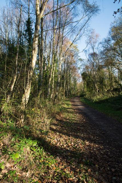 Derwent Walk passing Hamsterley