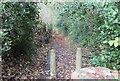 ST1898 : Pen-rhiw Bengi Lane, Oakdale by M J Roscoe