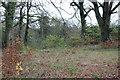 ST1898 : Pen-rhiw Bengi Marsh, Oakdale by M J Roscoe