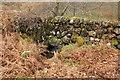 NX4180 : Burn under Dry Stane Dyke by Billy McCrorie