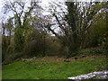 SN1001 : St Lawrence Church Gumfreston - corner of graveyard by welshbabe