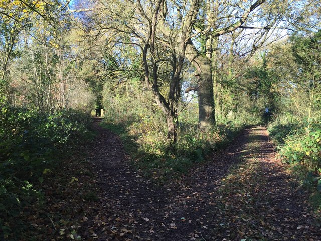 Belvide Reservoir: paths through the wood