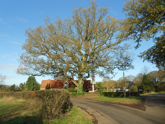 Rableyheath: Oak tree at the Robin Hood & Little John Public House
