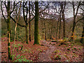 NY3804 : Path in Stock Ghyll Woods by David Dixon