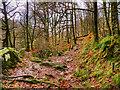 NY3804 : Ambleside, Stock Ghyll Woods by David Dixon