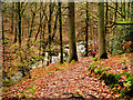 NY3804 : Stock Ghyll Woods, Path Down from the Waterfall by David Dixon