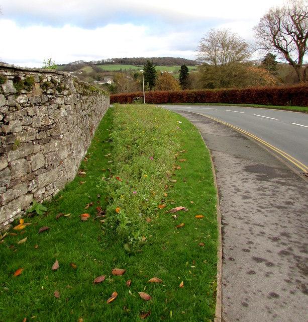 Strip of wild flowers, Hillside Road, Llangattock
