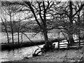 NY3604 : River Rothay, near to Ambleside by David Dixon