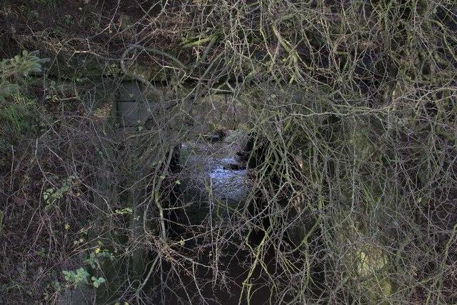 Overgrown Bridge
