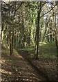SS8677 : Woodland footpath, Candleston by eswales