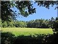 SY3394 : Meadow by Ladder's Coppice by Derek Harper