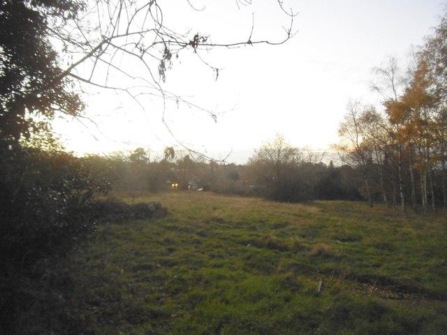 Field by Elstree Road, Bushey Heath