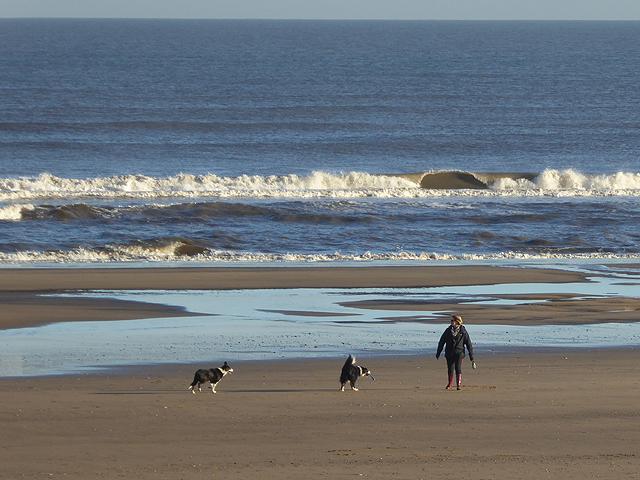 Dog walker on Crimdon Beach