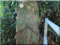 SY3696 : Waymark on blocked footpath near Guppy by Derek Harper