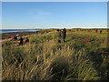 TF6430 : A high tide gathering of birdwatchers by Hugh Venables