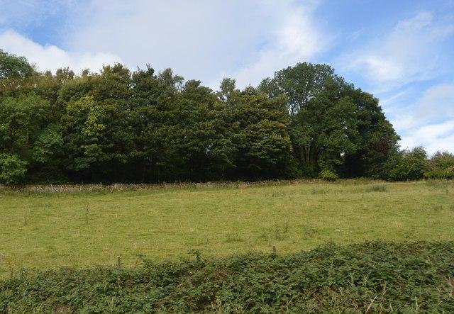 Farmland near Flora Wood