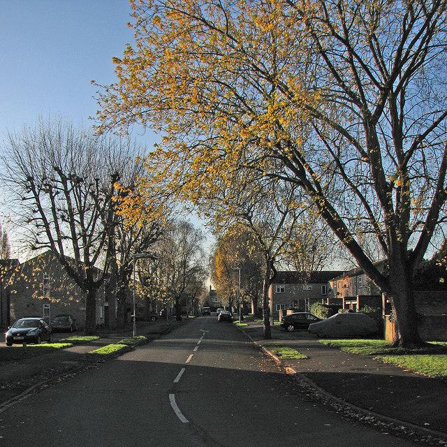 Lichfield Road: winter light