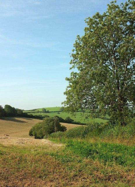 Field boundary near Pensipple