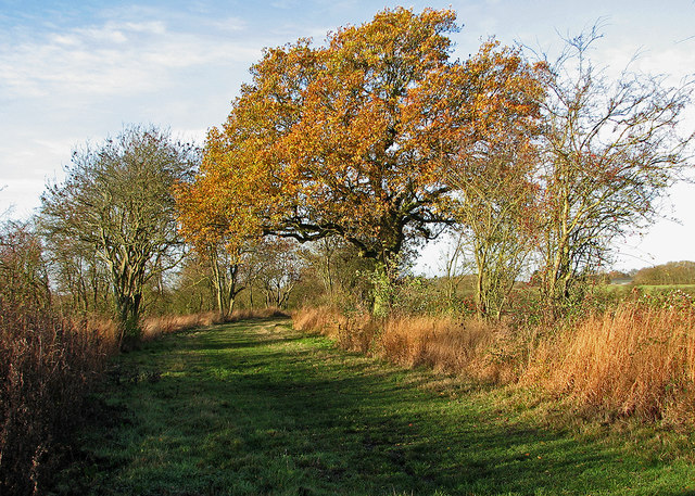 Bridle path to Bourn