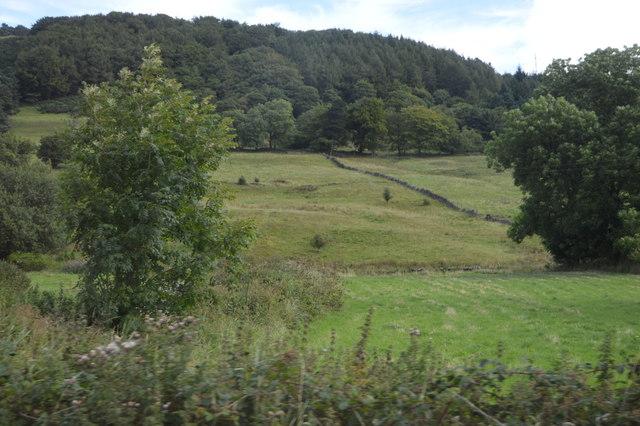 Field, Eyam View Farm