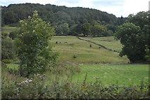 SK2076 : Field, Eyam View Farm by N Chadwick