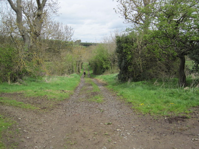 Footpath and Track towards Ridingmill Burn