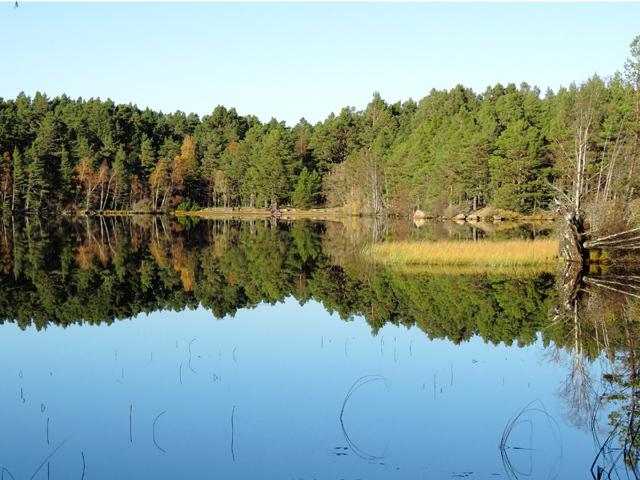 Loch Garten on a still sunny November day