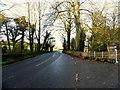H7445 : Derrycourtney Road by Kenneth  Allen