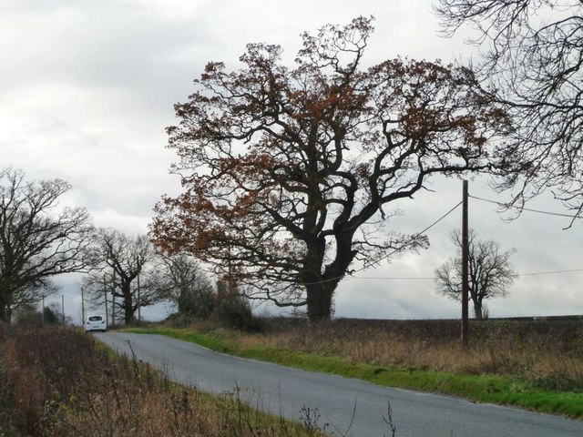 Roadside tree, Main Road, Harlaston