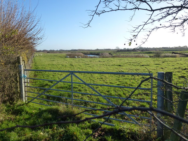 Pasture and sheep in the old gravel workings