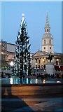 TQ3080 : Trafalgar Square Christmas tree by PAUL FARMER