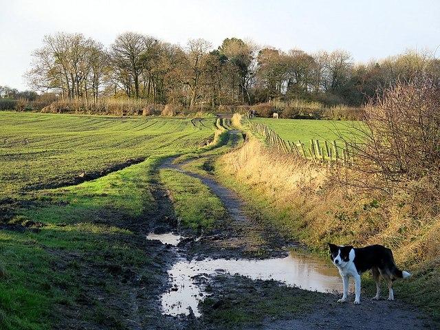 Track west of Throckley North Farm